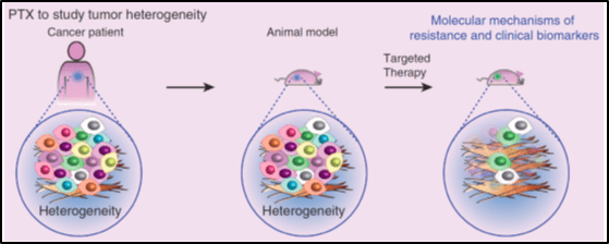 PDX to identify mechanisms of resistance