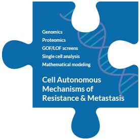 piece-cell-autonomous-mechanisms-of