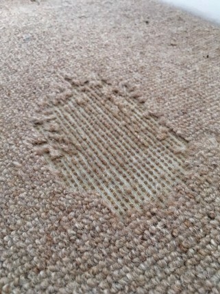 damage to carpets by moths