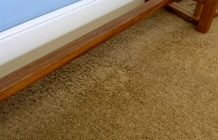 Carpet moth damage - pest control - Bentley environmental