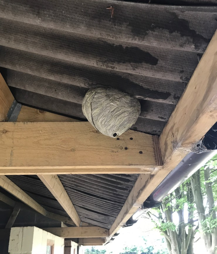 Contact us to arrange your wasp nest treatment