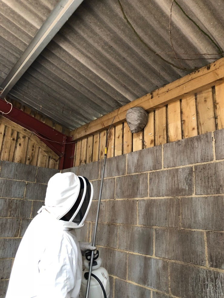 wasp nest treatment by Bentley Environmental