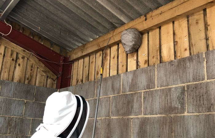 wasp nest treatment in barn