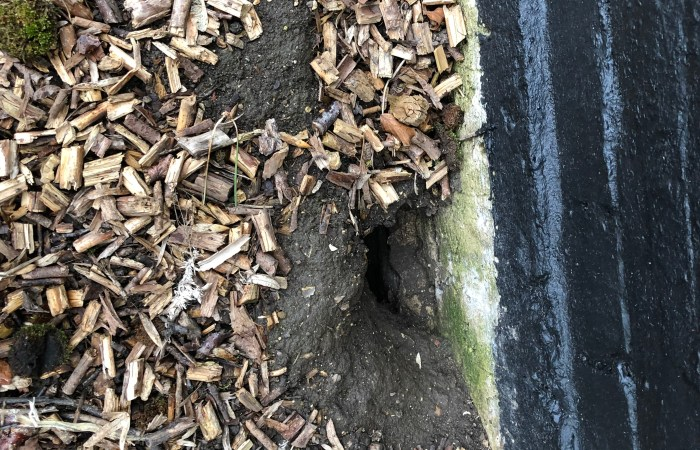 Rodent Burrowing - Local Pest Control