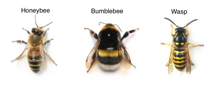 Bentley Env Wasp or Bee Pest Control