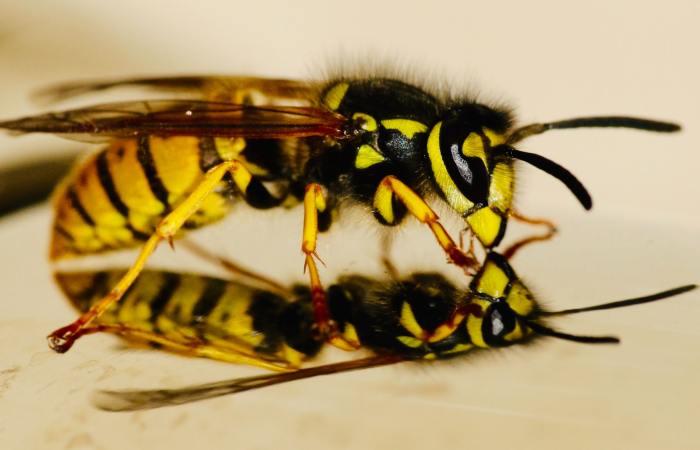 Bentley Environmental Wasp Nest Treatments