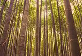 DAY 13 – KYOTO (ARASHIYAMA & GOLDEN PAVILION)
