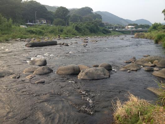狩野川 鮎釣り