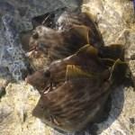 負け組のカワハギの釣りを体験!三浦