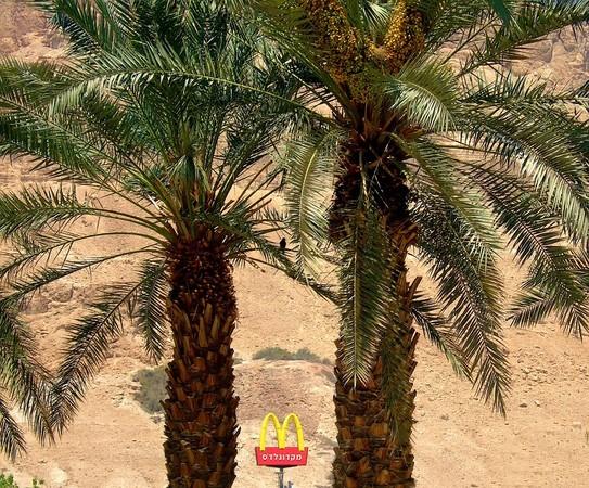 內蓋夫沙漠