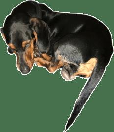 Seminarhund Micky