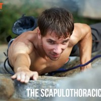 The Scapulothoracic Joint