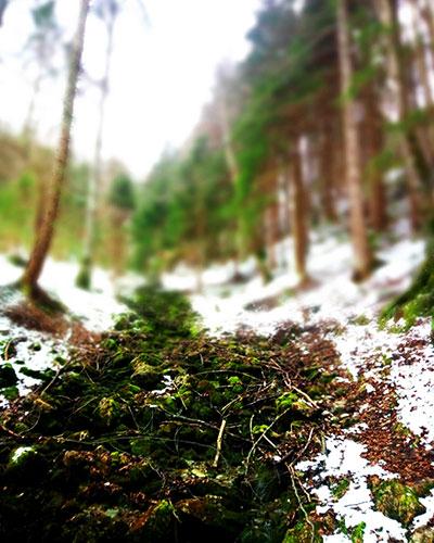 Waldweg-Aufstieg zum Eibenberg in Traunsee-Almtal