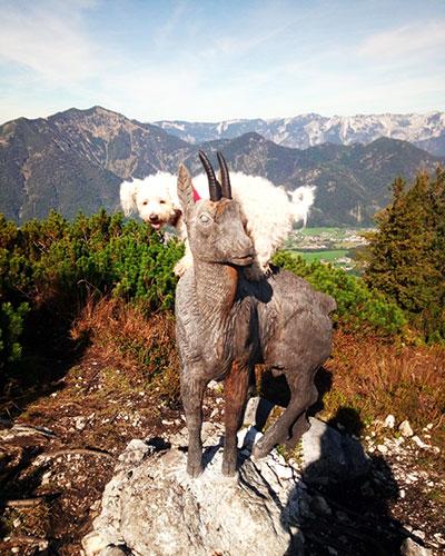 Ronja auf Gipfel des Feuerkogel beim Abstieg nach Bad Ischl