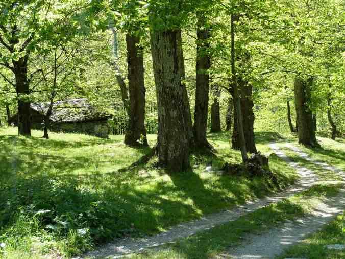 Castasegna Brentan: im Frühling dominiert das Grün