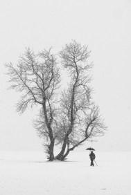 Til Vintertreet