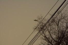 Around the crow