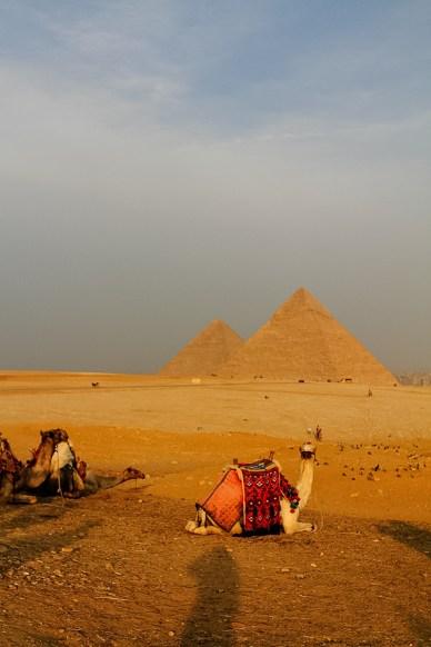 Kamel og pyramide