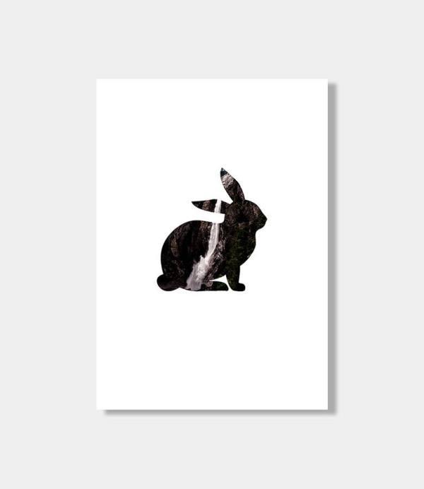 Amano rabbit