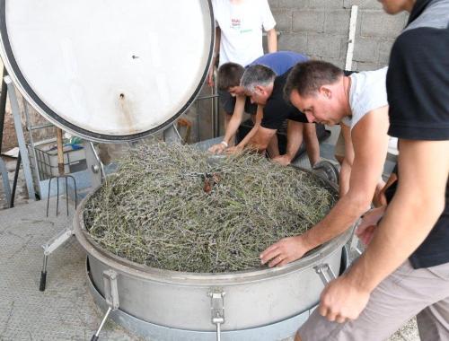 Cuve remplie de lavande