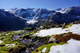 Leuchtendes Moos. Im Hintergrund die Wildspitze.