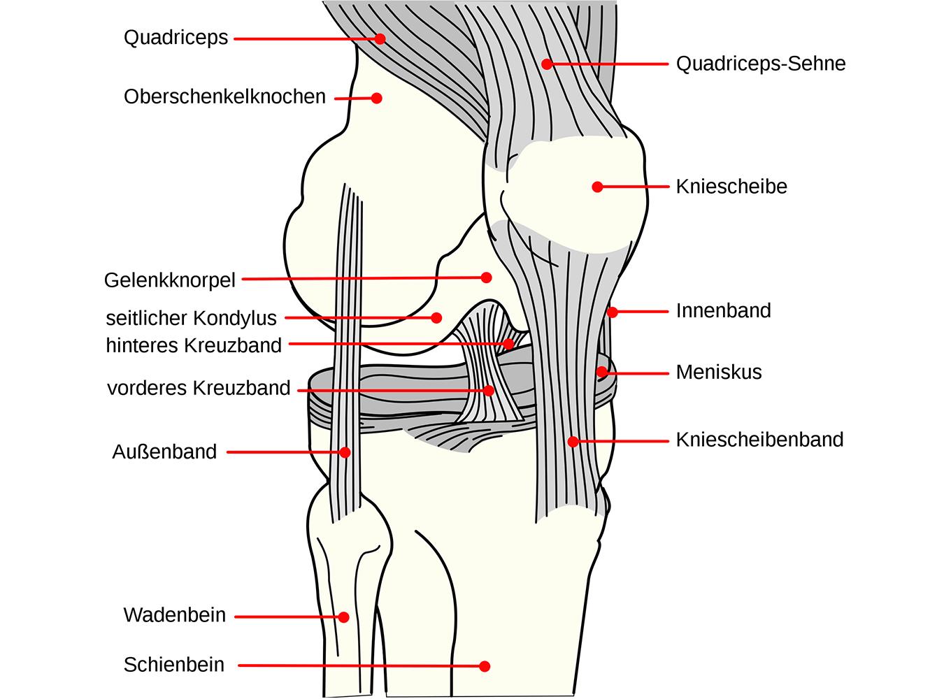 Kniescheibe knieschmerzen innen neben Kniescheibe Schmerzen