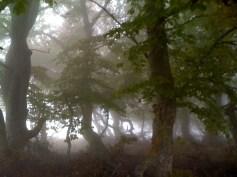 Mystische Nebelspiele