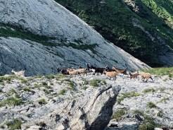 Monte-Tambura-Monte-Cavallo-Resceto-13