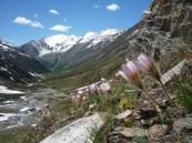 Botanischer Exkurs am Wegesrand