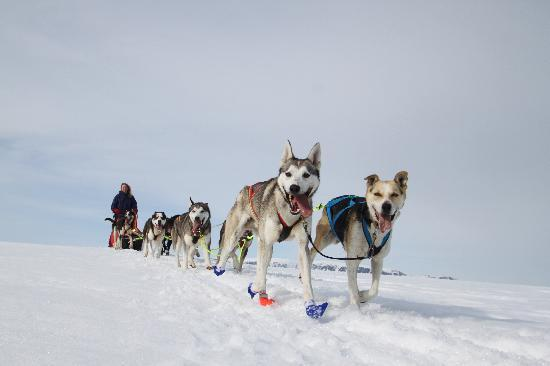 geilo-husky-day-tours