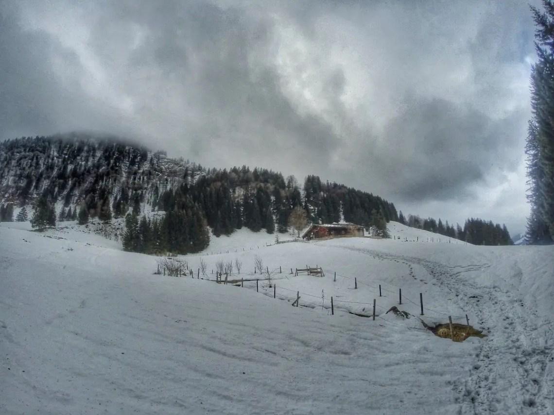 Die letzten Meter zur Alpe