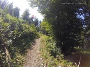 Waldpfad mit Trailcharakter