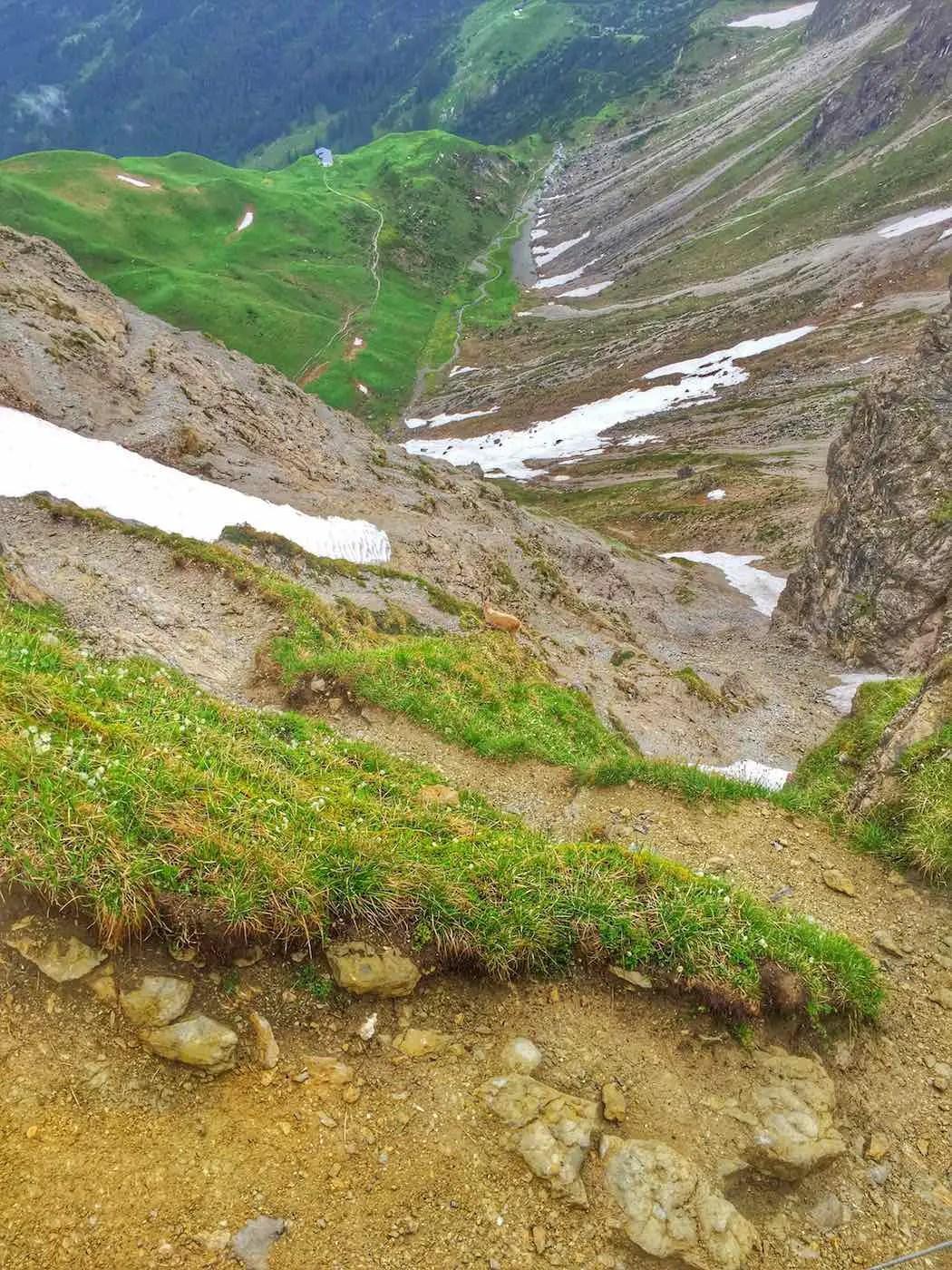 Steinbock auf dem Weg ins Wildental