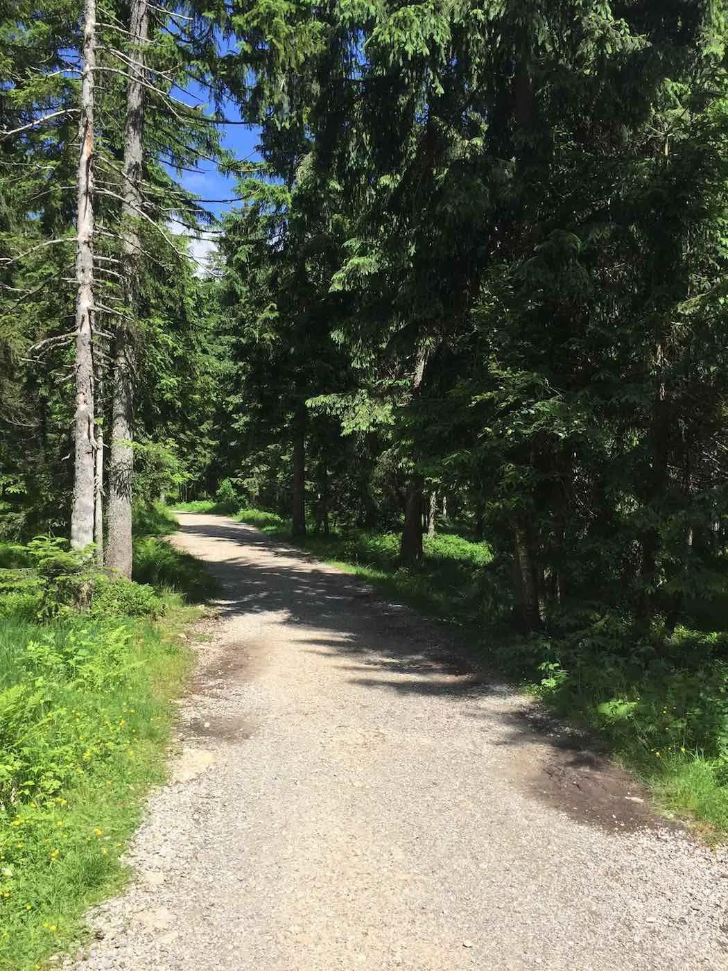 Waldweg zur Bergstation Imbergbahn