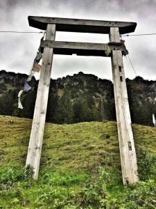 An der Älpele Alpe - Blick zum Sorgschrofen