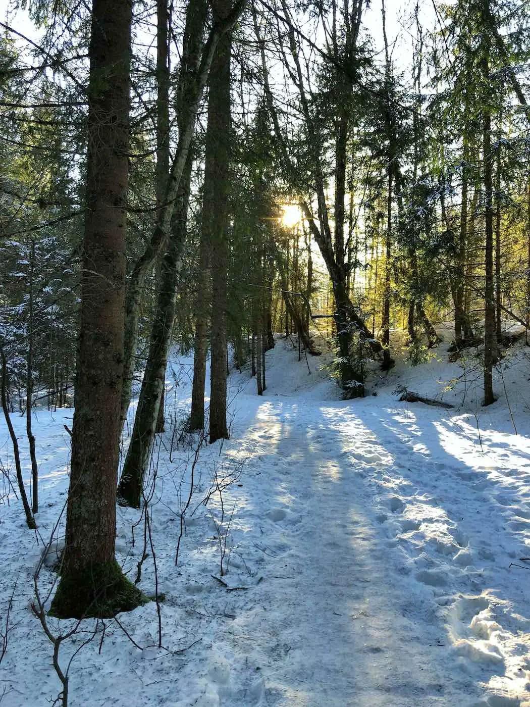 Durch den Wald zum Vilsalpsee