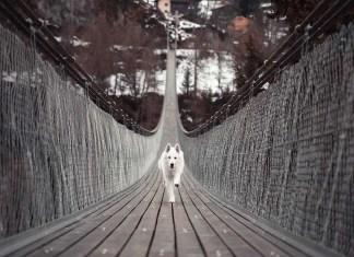 Anjing Yang Malang