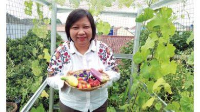 Photo of Rajin Menanam, Anis Hidayah Tak Perlu Beli Sayuran