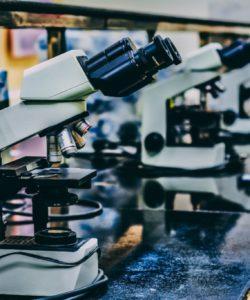 Road to longevity - The Berkeley Science Review