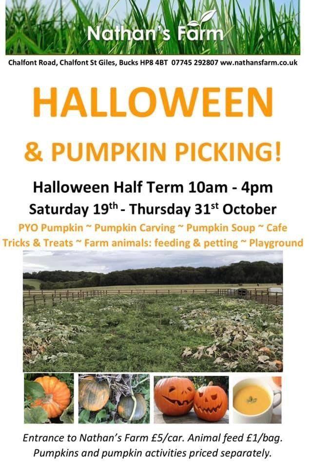 pumpkin picking south bucks, nathans farm pumpkins, halloween activities chalftont st giles, nathans farm october half temr