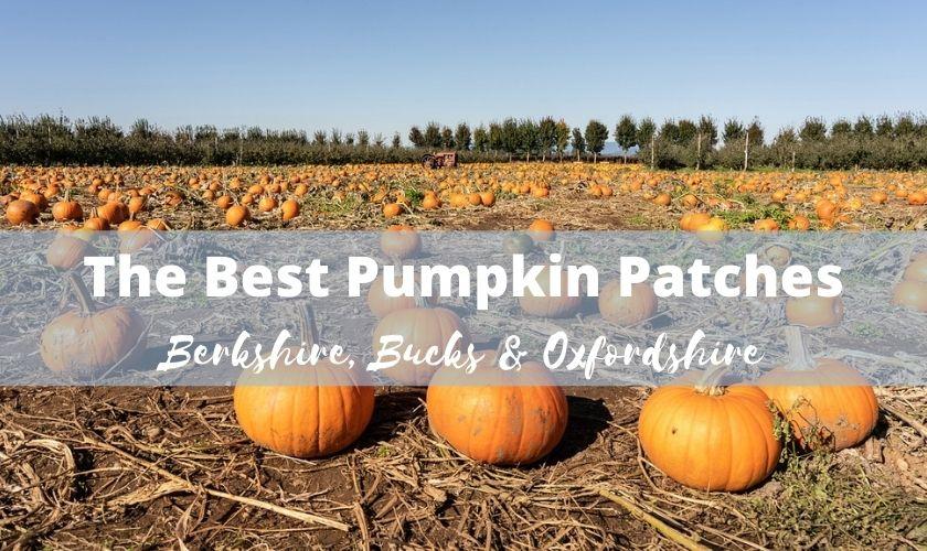 pumpkin picking oxfordshire, pumpkin picking berkshire, pumpkin picking buckinghamshire, pumpkin pick Newbury, pumpkin patches uk