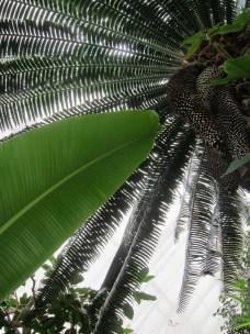 Vertiginous Palms