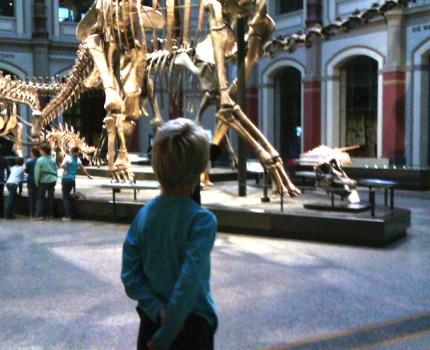 Rundvisning i dino- og spinosauere