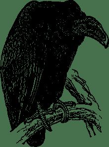 Vulture_