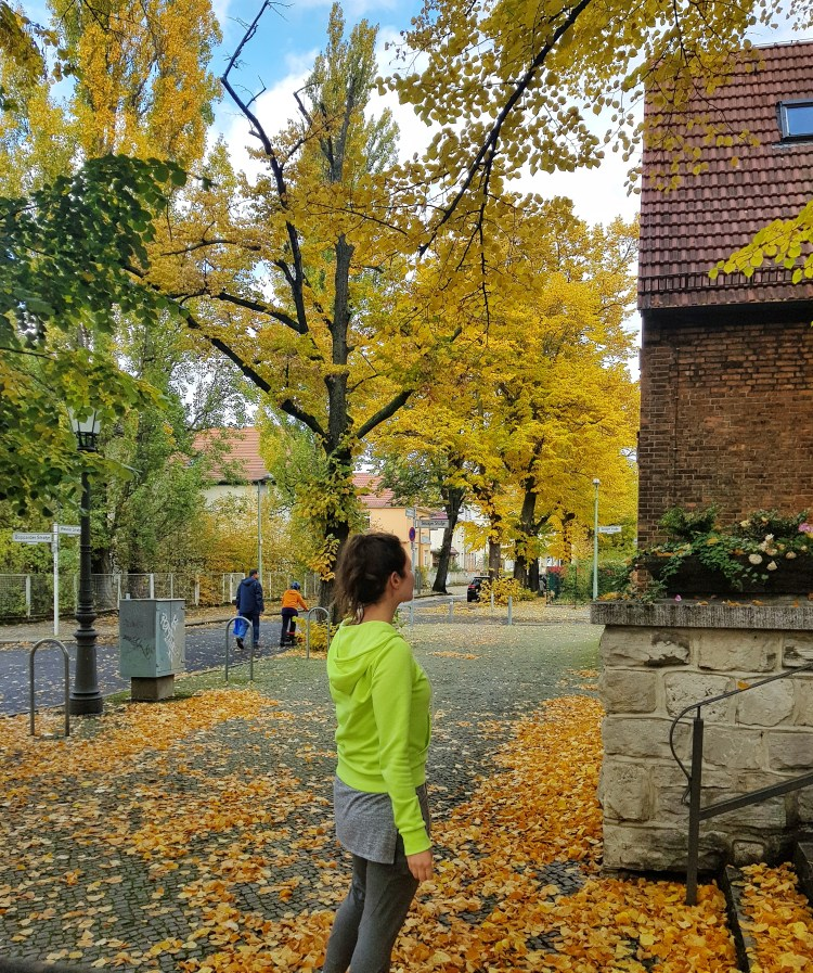 see fall foliage in Berlni