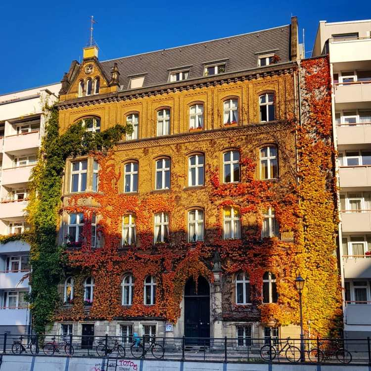 see fall foliage Berlin