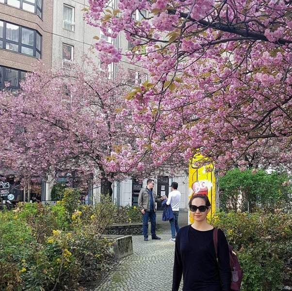see cherry blossoms in Berlin