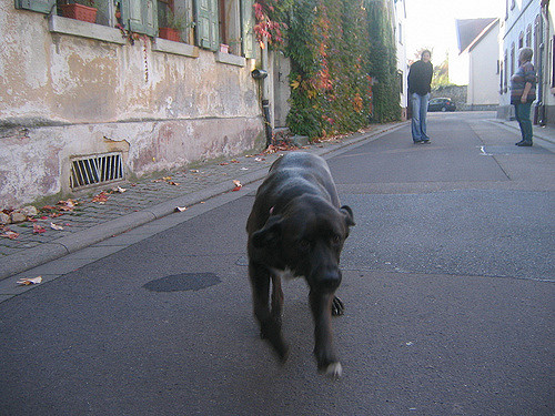 Four things Germany could teach the universe. Dogs do not need leashes.