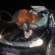 cavallo incidente