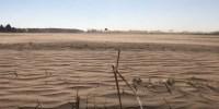 © Screenshot dal video YT Trockenheit in Brandenburg CC0